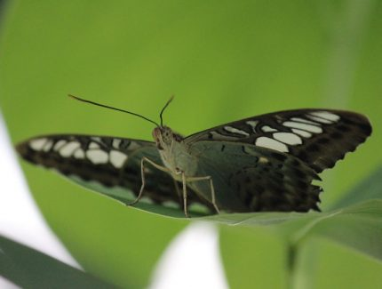 Schmetterling - Insel Mainau