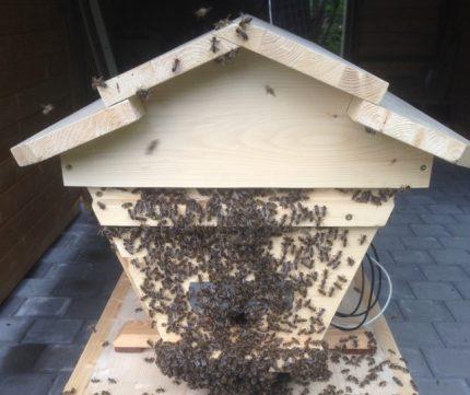 TBH mit Bienen