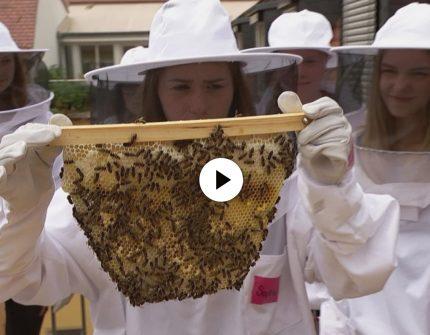 Schüler werden zu Bienenforschern