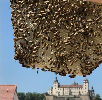 we4bee bees